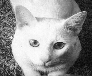 White cat lost